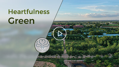 heartfulness green